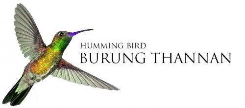 Kokap 26 Fakta Unik Tentang Hummingbird Burung Kolibri